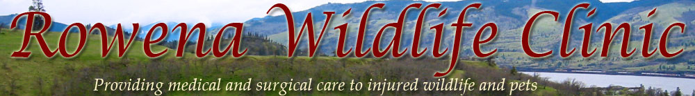 Rowena Wildlife Clinic