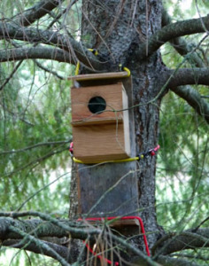 Flying Squirrel Box