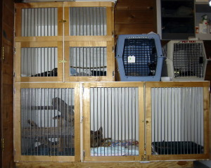 Indoor cages for recuperating wild animals
